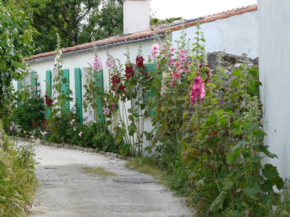L'île de ré, una cultura saporita