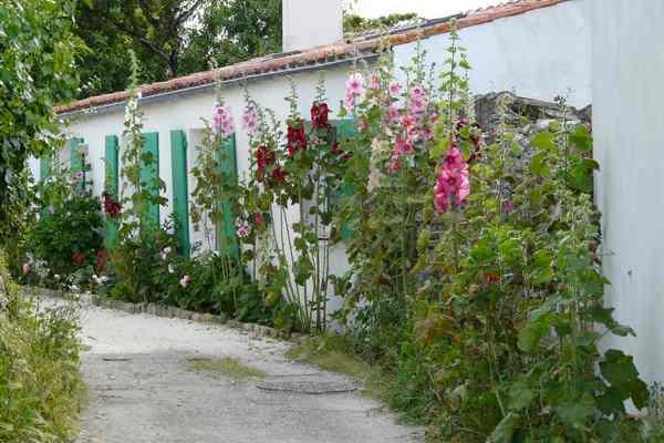 L'île de ré, une culture savoureuse