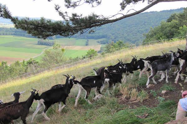 'ROULE MA POULE' FARM MEANDER