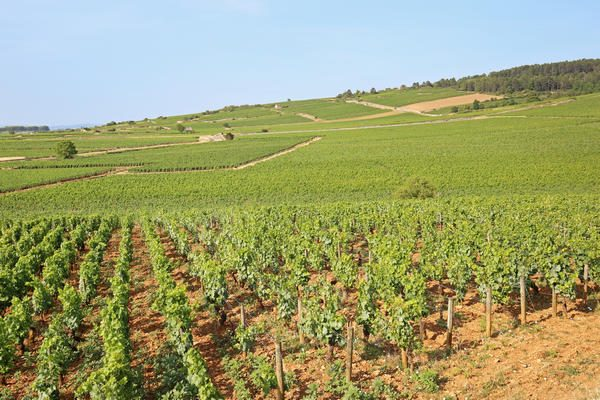Discover the beautiful Côte d'Or region in the Burgundy