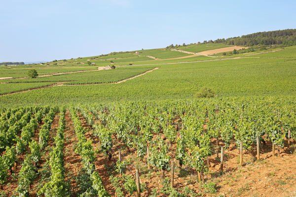 Entdecken Sie die schöne Region Côte d'Or im Burgund