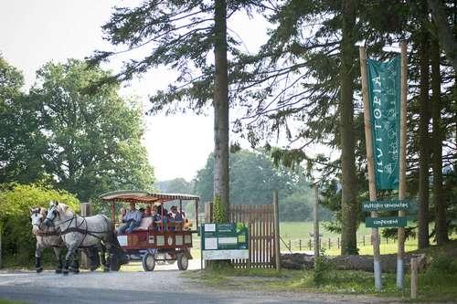 Tocht met paard en wagen