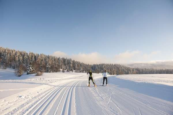 Downhill skiing, cross-country skiing, and ski touring