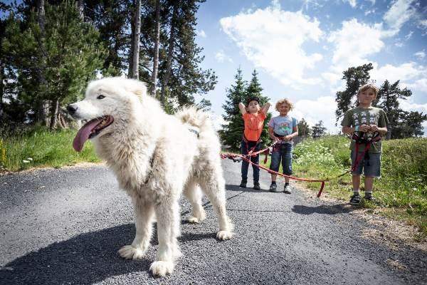 Wandelen met honden