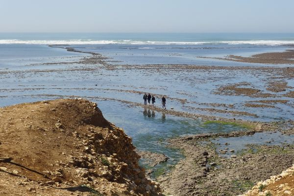 Discover the rocky foreshore