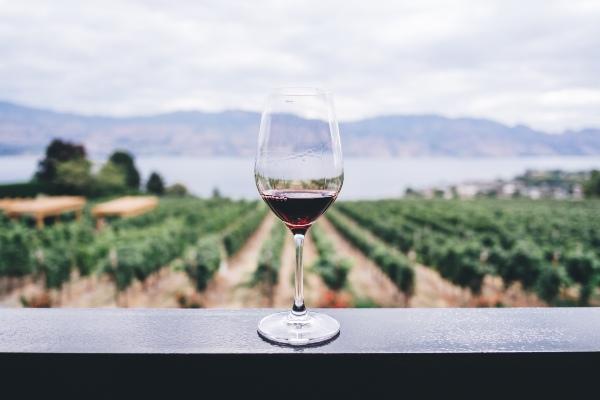 Dégustation de vins